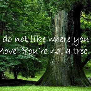 Vous n'êtes pas un arbre!