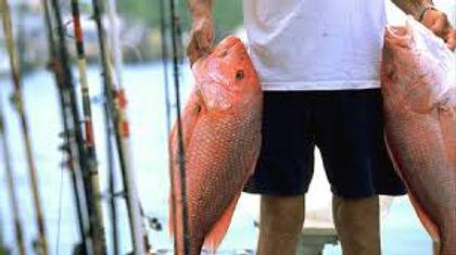 Snapper fish.jpg