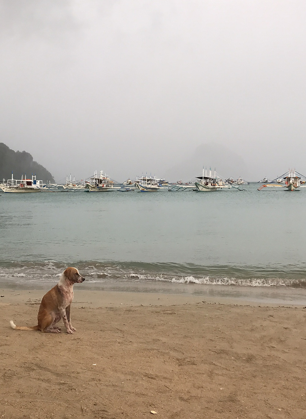 Baltic the dog not too happy with the current weather in El Nido. No dive for him too!