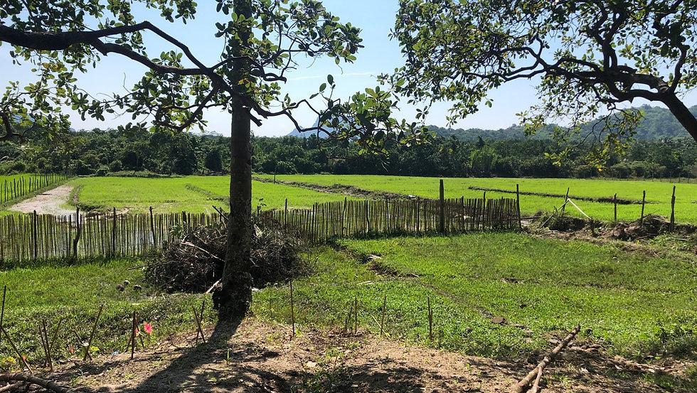 Manlag, Farm, El Nido.jpeg