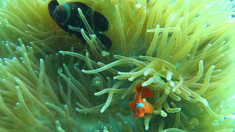 Find Nemo at El Nido