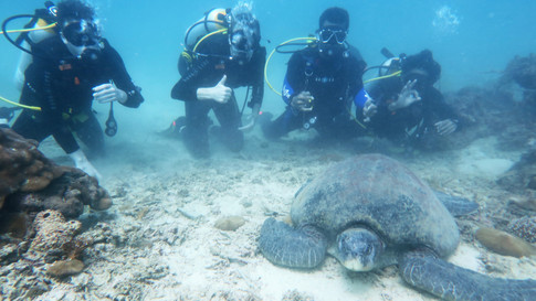 Lolo The Turtle