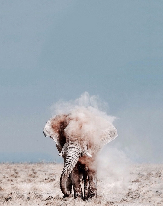 Жаркое сафари в Танзании