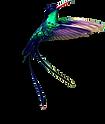 Doctor Bird