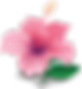 Hibiscus_Flower.png