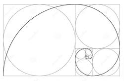 The Fibonacci Spiral appears in many ways within nature.