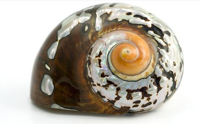 Fibonacci Shell.png