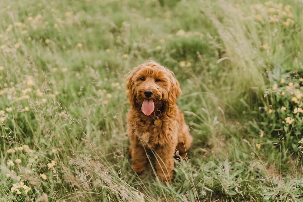 Lichfield pet photography