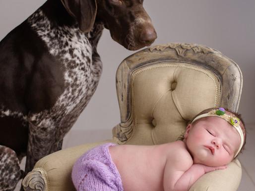 Ella | Newborn & Pet Photographer in Lichfield, Staffordshire