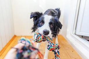 collie rope toy.jpg