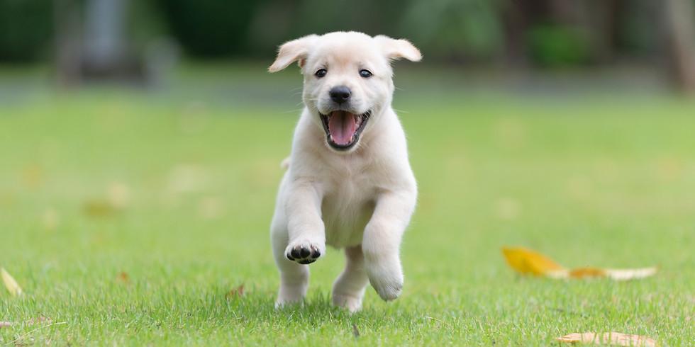 Puppy Class Only (Mon AM)