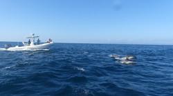 surfrider dolphin still 3.jpg