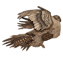 G_Sage_Grouse_1-removebg-preview.png