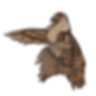 G_Sage_Grouse_2-removebg-preview.png