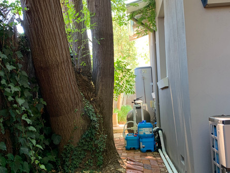 Building inspections Perth - trees in close proximity to house and structural cracking in walls