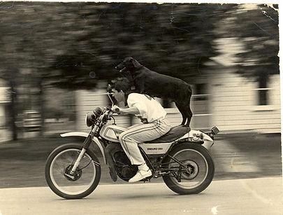 motodog.jpg