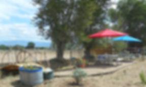 Gardenarea7 July 21.jpg