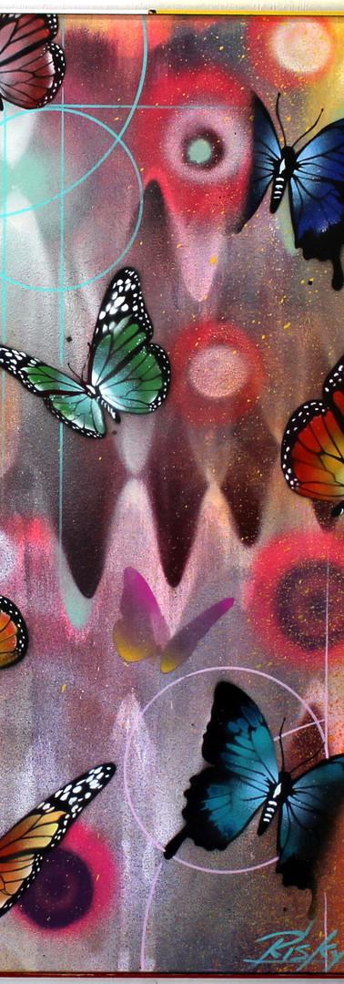 Hoxxoh Butterflies