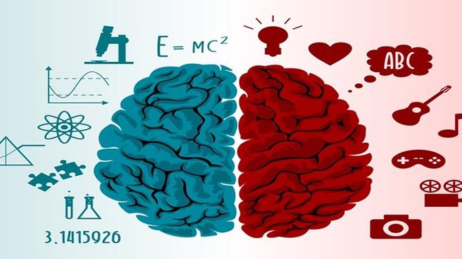 Entenda as principais diferenças do cérebro emocional e racional