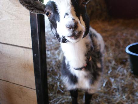 Glass Goat Yoga