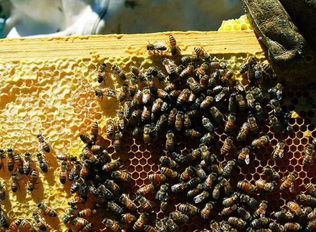 The Keeping of Bees