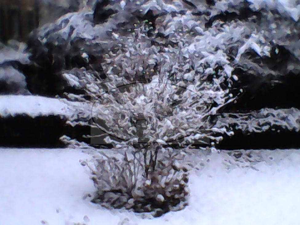 Winterland #01