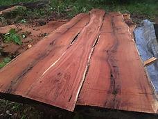 Red Oak Slabs after rain.jpg