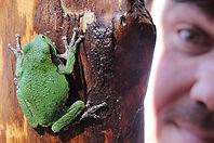 TreeFrog-Dave.jpg