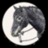 Simple Equine Teaching Horses