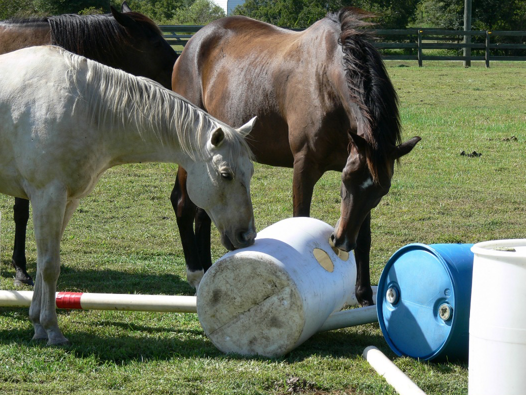 Simple Equine Teaching - Helpers