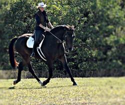 Simple Equine Teaching-Through