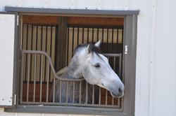 Simple Equine Teaching-Mr. Handsome