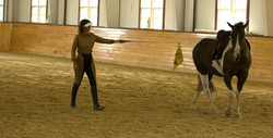 Simple Equine Teaching - Moving