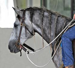 Simple Equine Teaching-LionWE Clinic