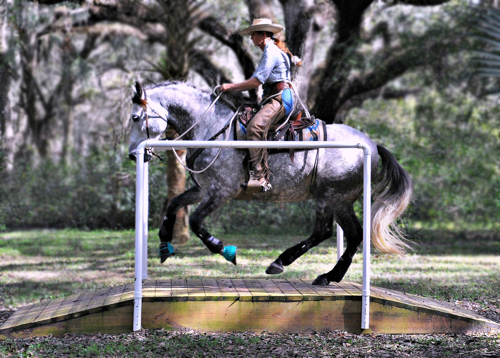 Simple Equine Teaching-LionWEBridge