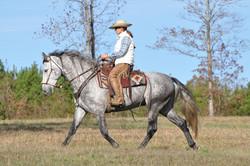 Simple Equine Teaching - 1st Bosal