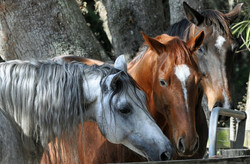Simple Equine Teaching - The 3