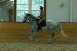 Simple Equine Teaching - Sigma After