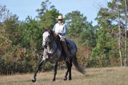 Simple Equine Teaching-Lion Trotting