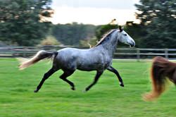 Simple Equine Teaching-Meet Lion