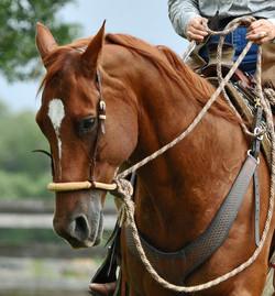 Simple Equine Teaching-Round