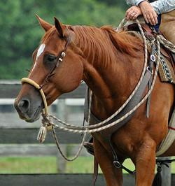 Simple Equine Teaching-Zig Watching