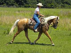 Simple Equine Teaching-Bub