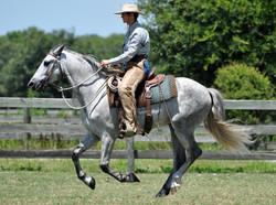 Simple Equine Teaching-Dee&Compa