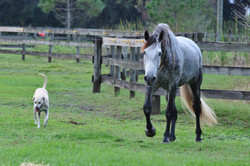 Simple Equine Teaching-Lion&Jute2