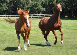 Simple Equine Teaching - Zig Says!