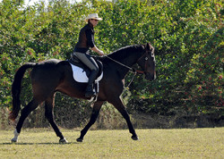 Simple Equine Teaching - Warm Up