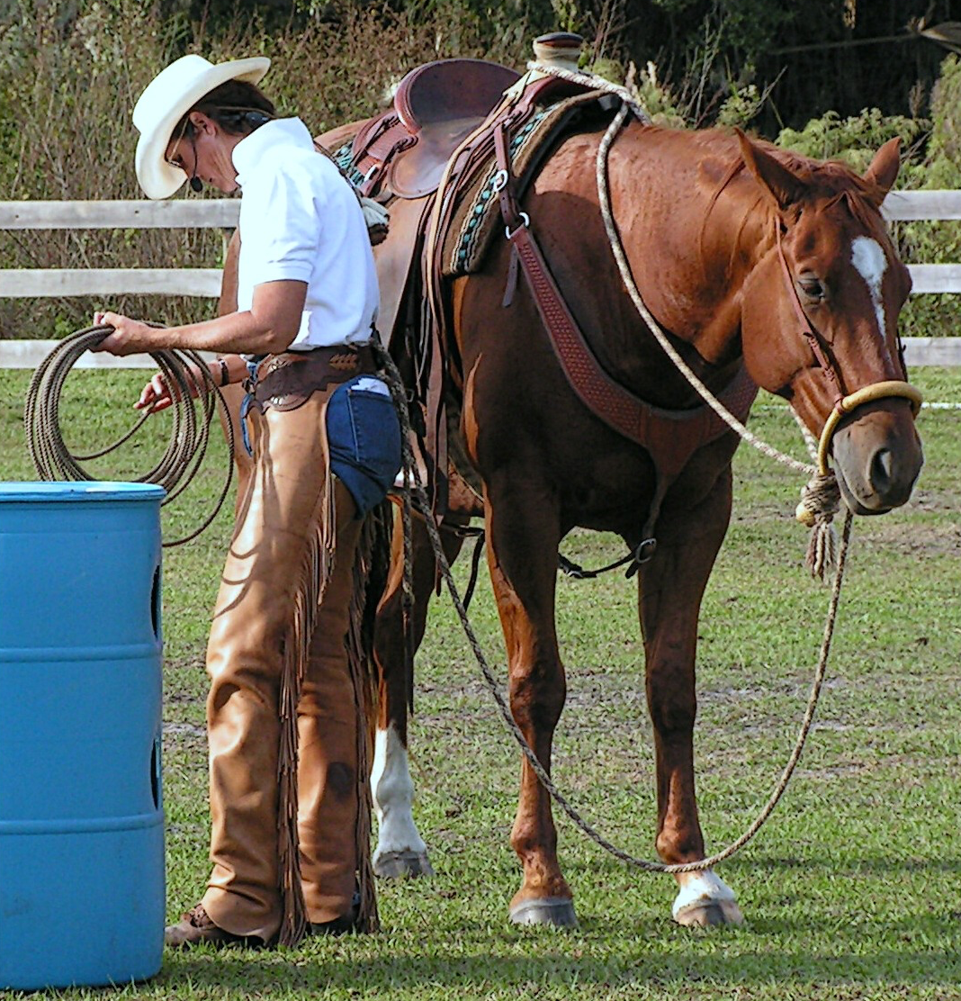 Simple Equine Teaching-Standing By