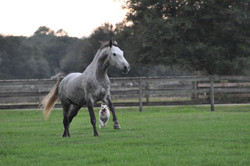 Simple Equine Teaching-Lion&Jute