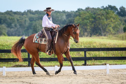 Hank Newberry Dressage Canter